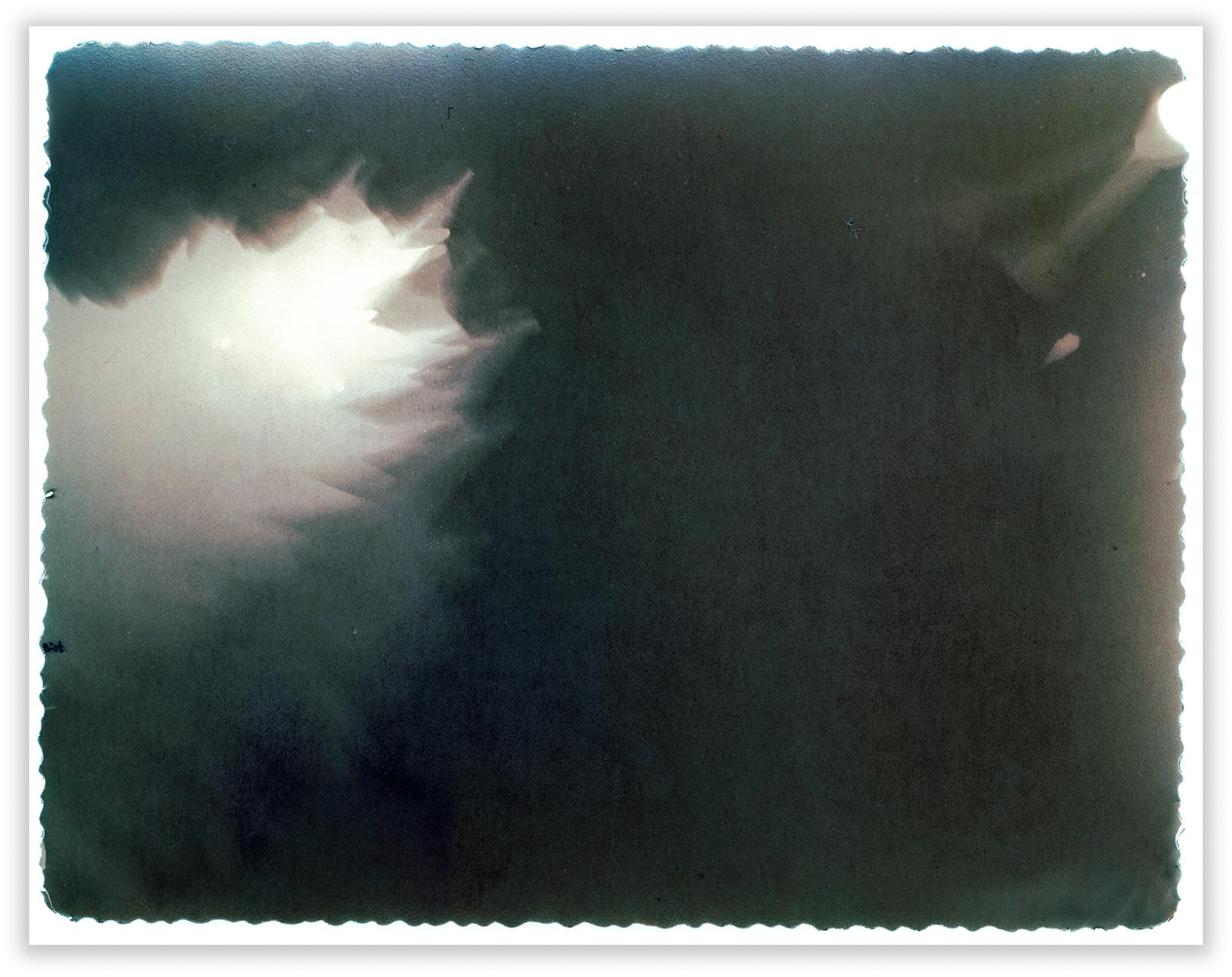 "Magnoliascanned lumen print 51 x 40.5 cm  (20"" x 16"")"